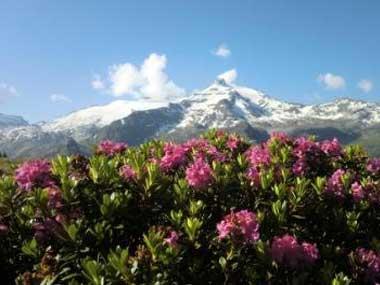 alpenrose-sommer-suedtirol-garni-florian